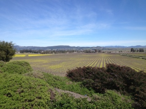 The view of Gloria Ferrer's vineyards.