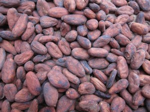 Cacao beans. Photo by Flickr user Bex Walton. Used under CC license BY-NC-ND 2.0.